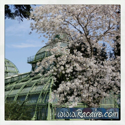 Happy Easter! ...and some Spring Impressions from Vienna, Schönbrunn :D